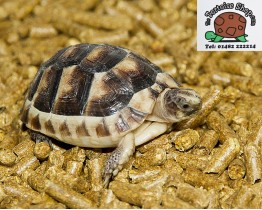 Tortoise Pellet Bedding Twin Pack