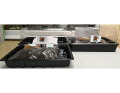 The Tortoise Shop Propagator Twin Pack