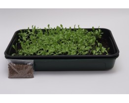 Grow Your Own Tortoise Food (Clover) DISCONTINUED