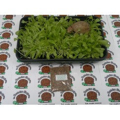 Grow Your Own Tortoise Food (Clover)