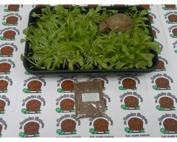 Grow Your Own Tortoise Food (Mix seeds)