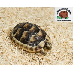Aspen Bedding 8kg Multi Pack