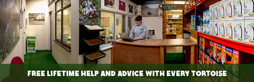 FREE lifetime help and advice with every Tortoise