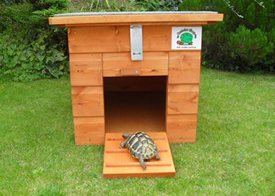 Tortoise Accommodation
